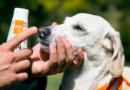 La exposición al sol y altas temperaturas puede afectar la piel de tus mascotas
