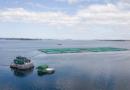 Estudio de Universidad Austral de Chile muestra ventajas del uso de gas propano en instalaciones acuícolas