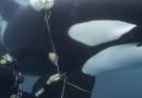 8 datos reveladores de «Secretos de las Ballenas», documental que llega hoy a Disney+